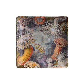 Cubic-Haeckel-Bandeja-Pequeña-Vida-Marina